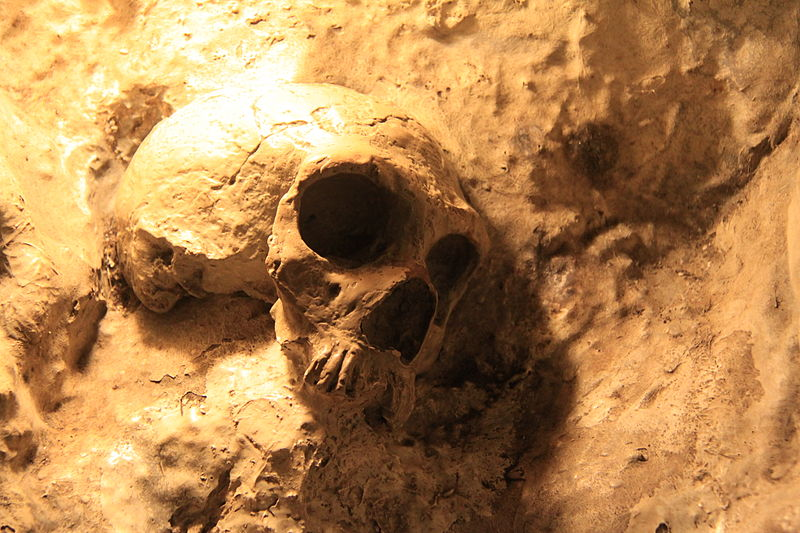 800px-Replica_of_Neanderthal_Skull_in_St._Michaels_Cave,_Gibraltar.jpg