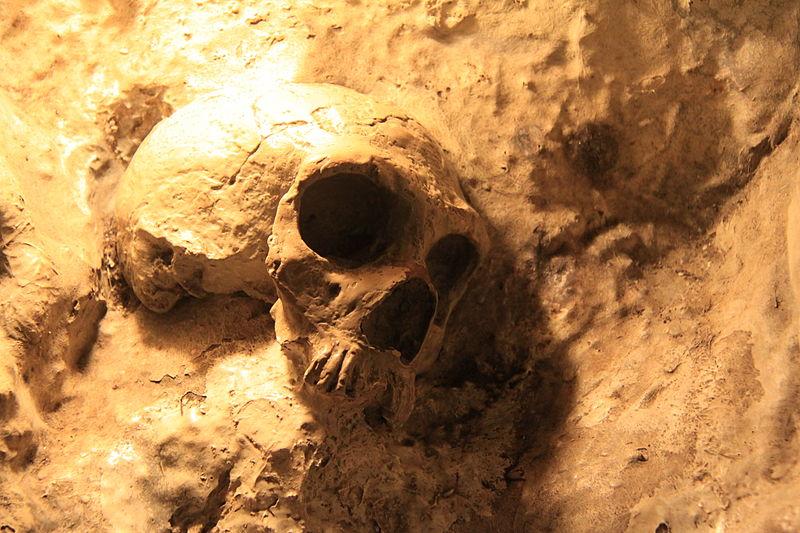 800px-Replica_of_Neanderthal_Skull_in_St._Michaels_Cave,_Gibraltar.jpg